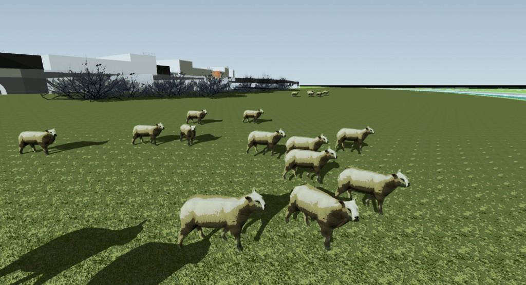 schapenberm Poel V