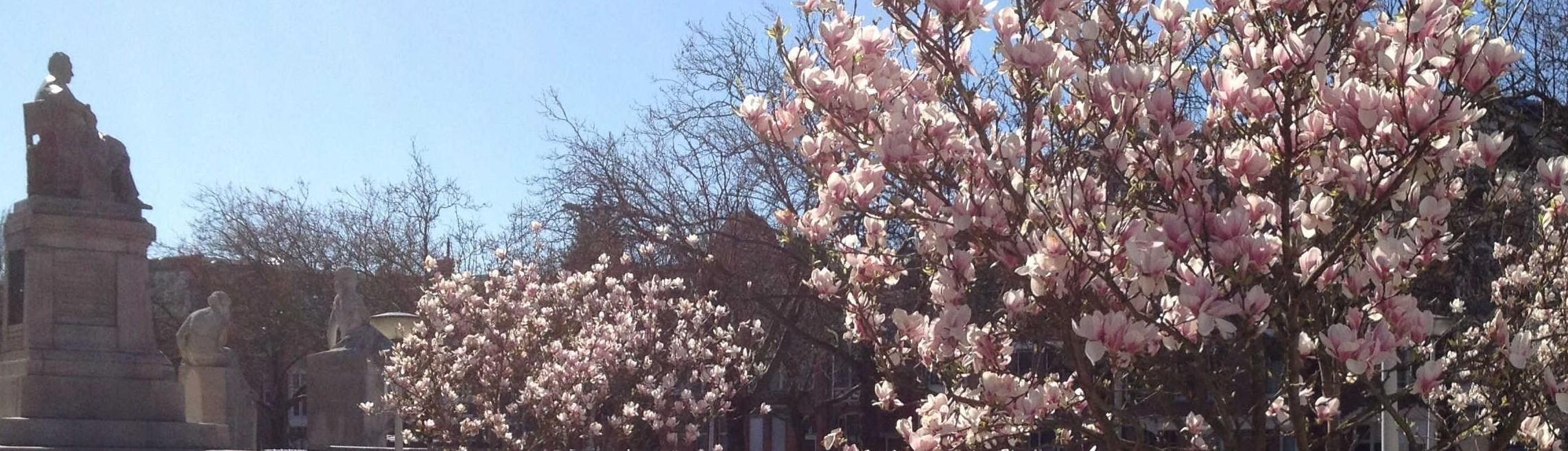 magnolia's001